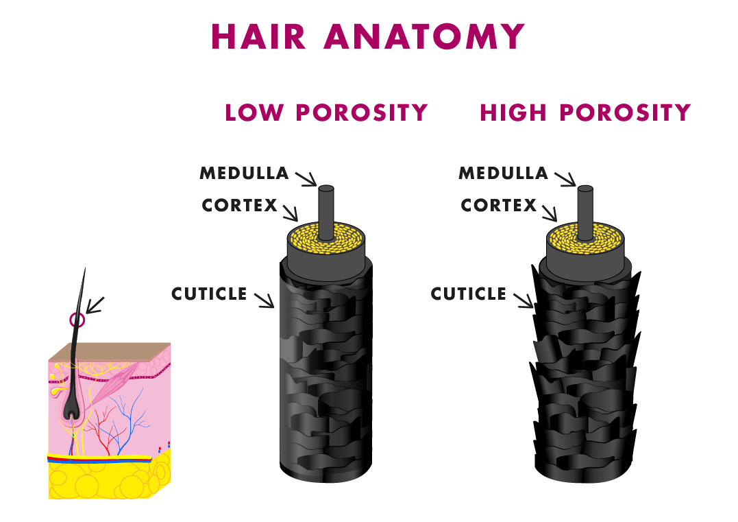 Hairfinity Ae Blog Hair Care Tips For Porosity Repair