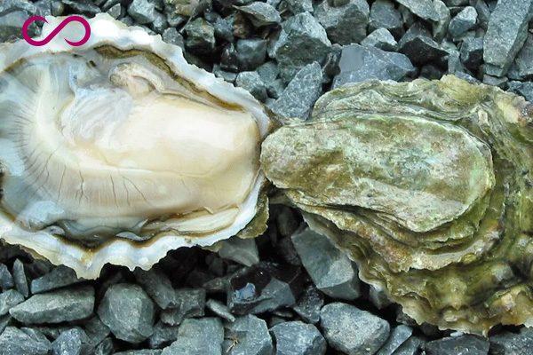 Oysters Helps Hair Grow